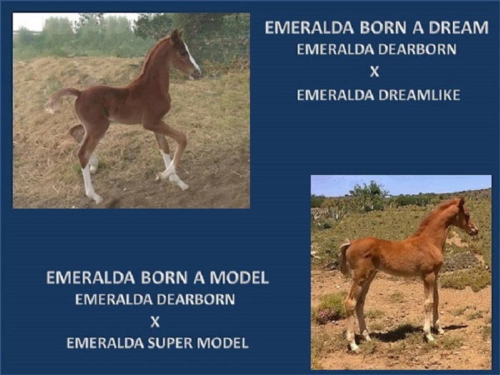 EMERALDA BORN A DREAM BORN A MODEL POWERPOINT