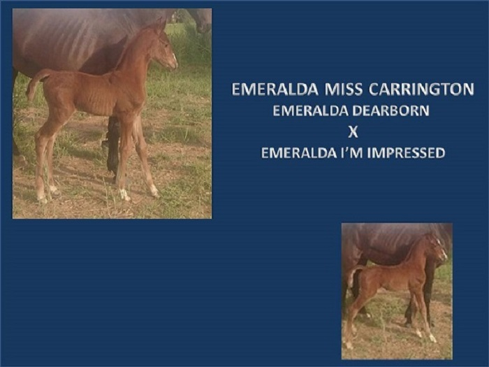 EMERALDA MISS CARRINGTON POWERPOINT