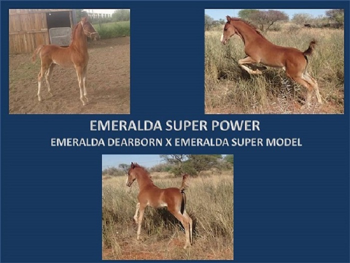 EMERALDA SUPER POWER POWERPOINT