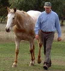 NATURAL HORSEMANSHIP 1