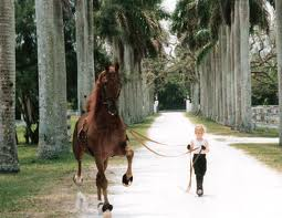 SADDLEBRED CHILD'S HORSE