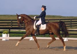 SADDLEBRED DRESSAGE