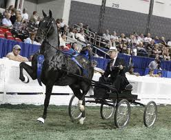 SADDLEBRED FINE HARNESS