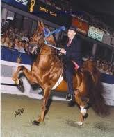 SADDLEBRED THREE GAITED