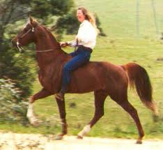 SADDLEBRED TRAIL RIDING