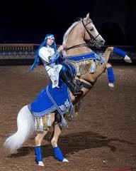 SADDLEBRED TRICK HORSE