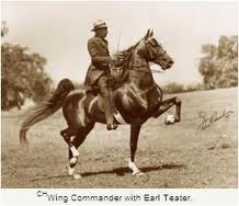 SADDLEBRED WING COMMANDER