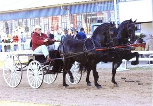 VLAAM CART HORSES